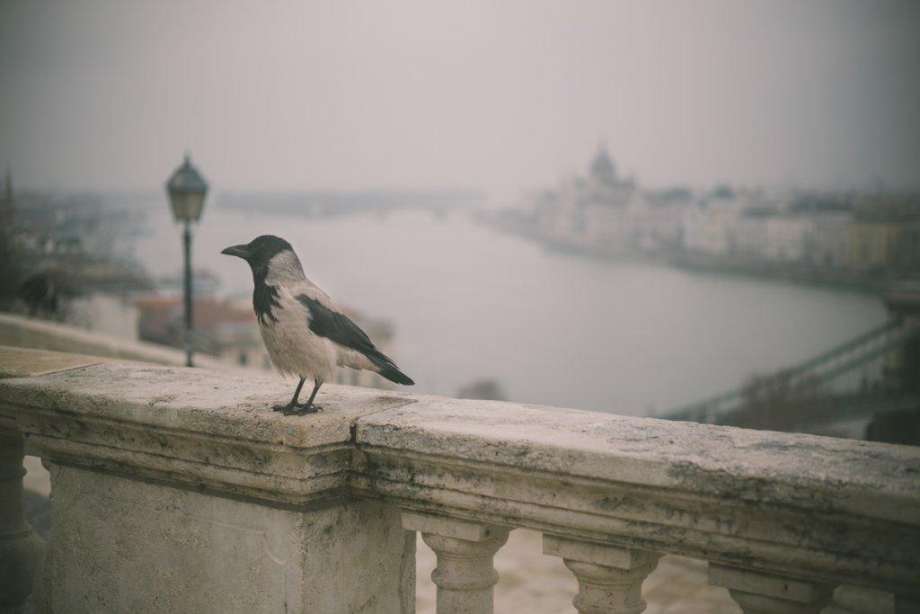 boedapest kort verhaal