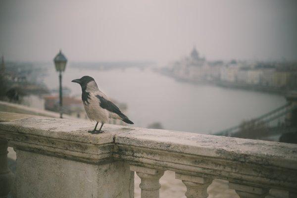 In beeld: 2 dagen Boedapest