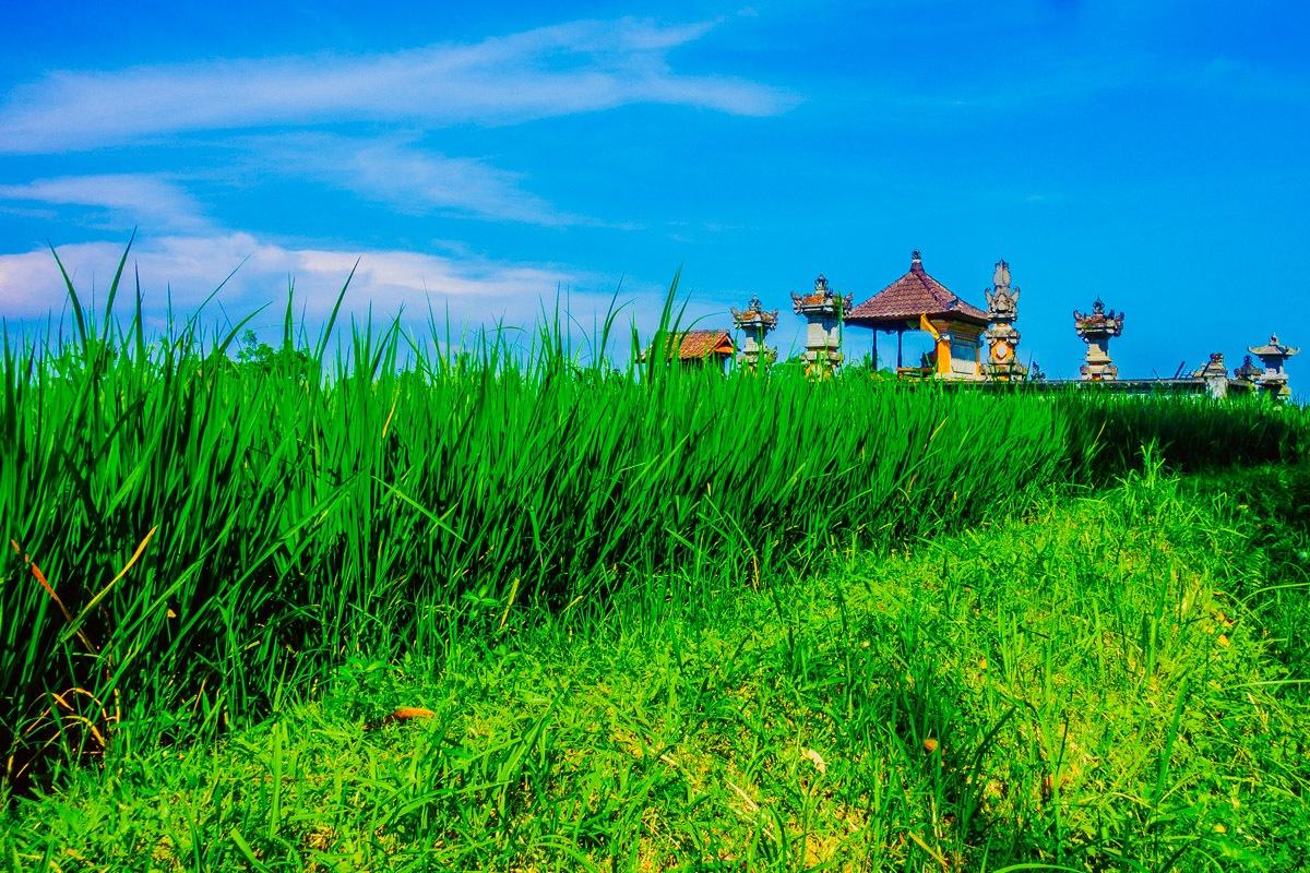 Bali 150422 63