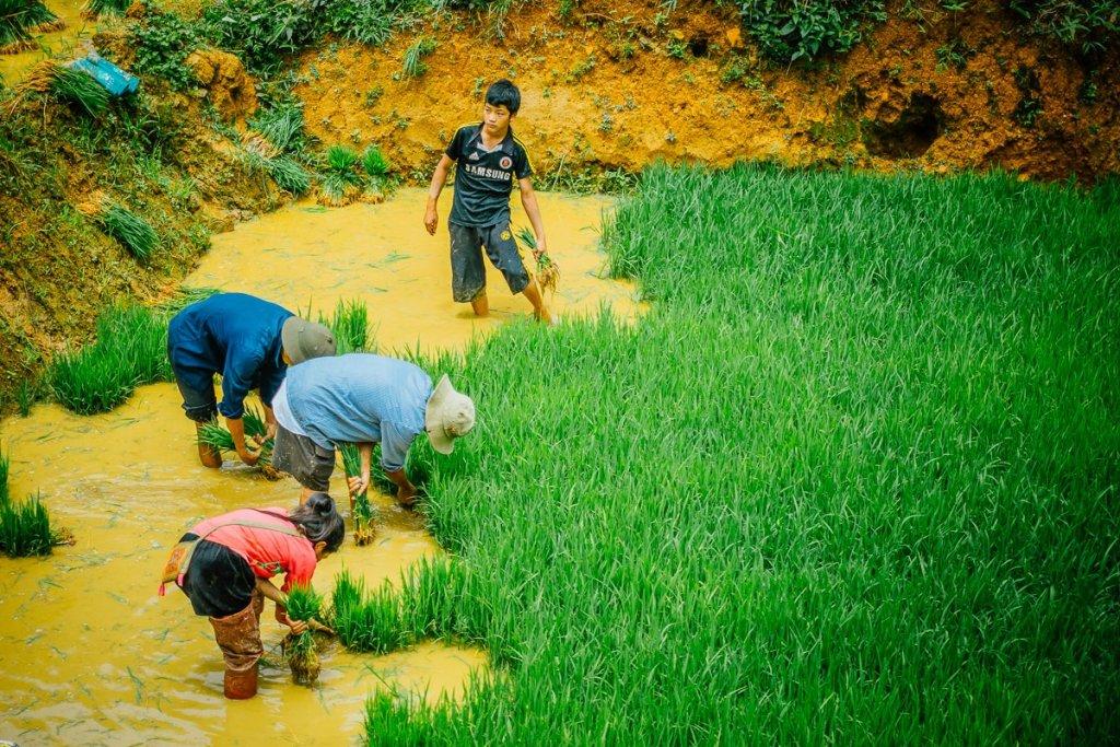 Wat te doen in Sapa Vietnam