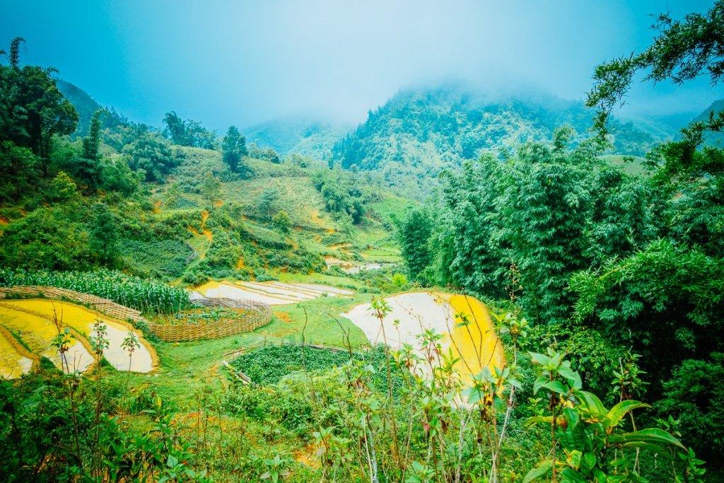 fotos van rijstvelden in vietnam