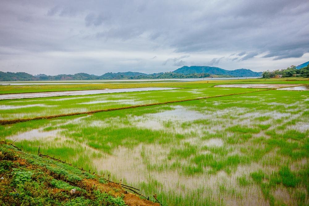 rijstvelden bezoeken vietnam