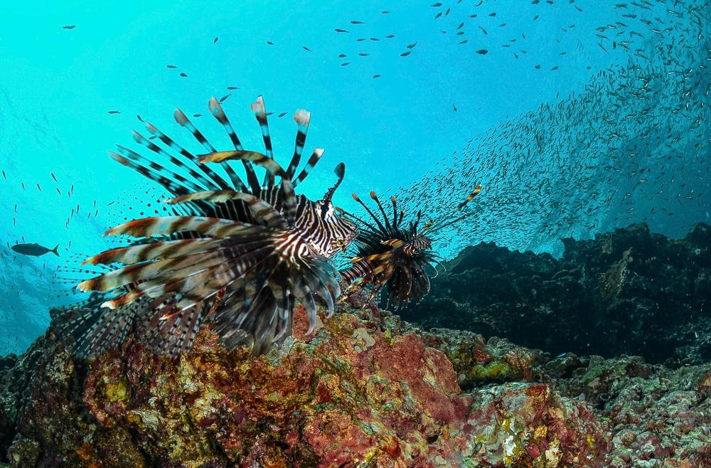 duiken in thailand