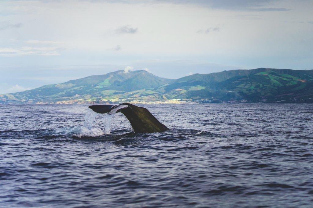 walvis spotten op de azoren