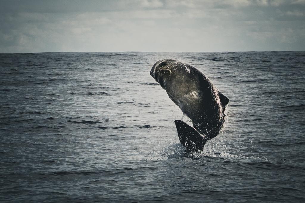 Dolfijnen en walvissen Europa