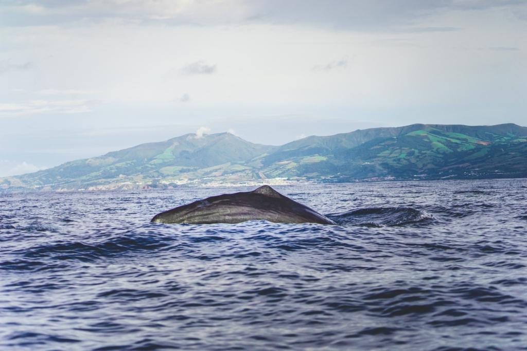 Walvissafari Azoren