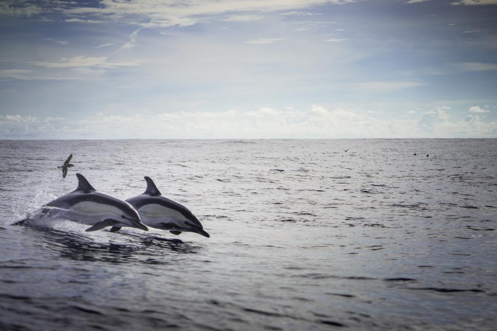 dolfijnen en walvissen kijken