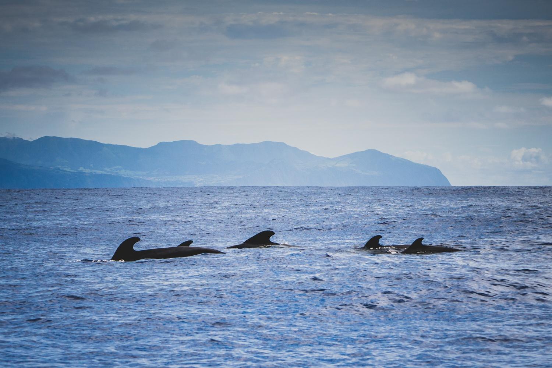 walvissen spotten in Portugal