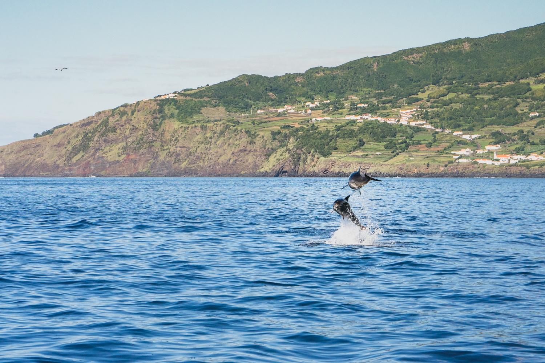 azoren walvissen en dolfijnen