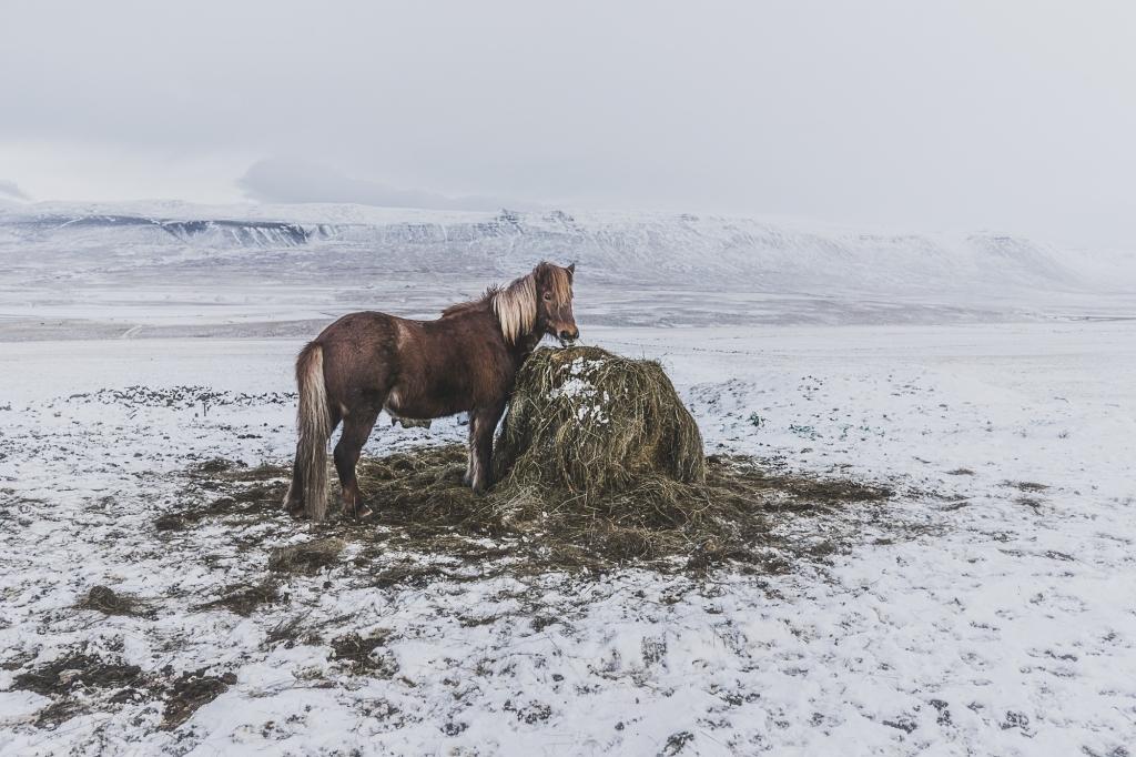 ijsland storytelling