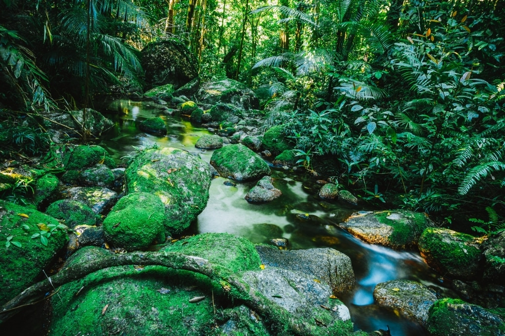 Daintree jungle regenwoud Queensland