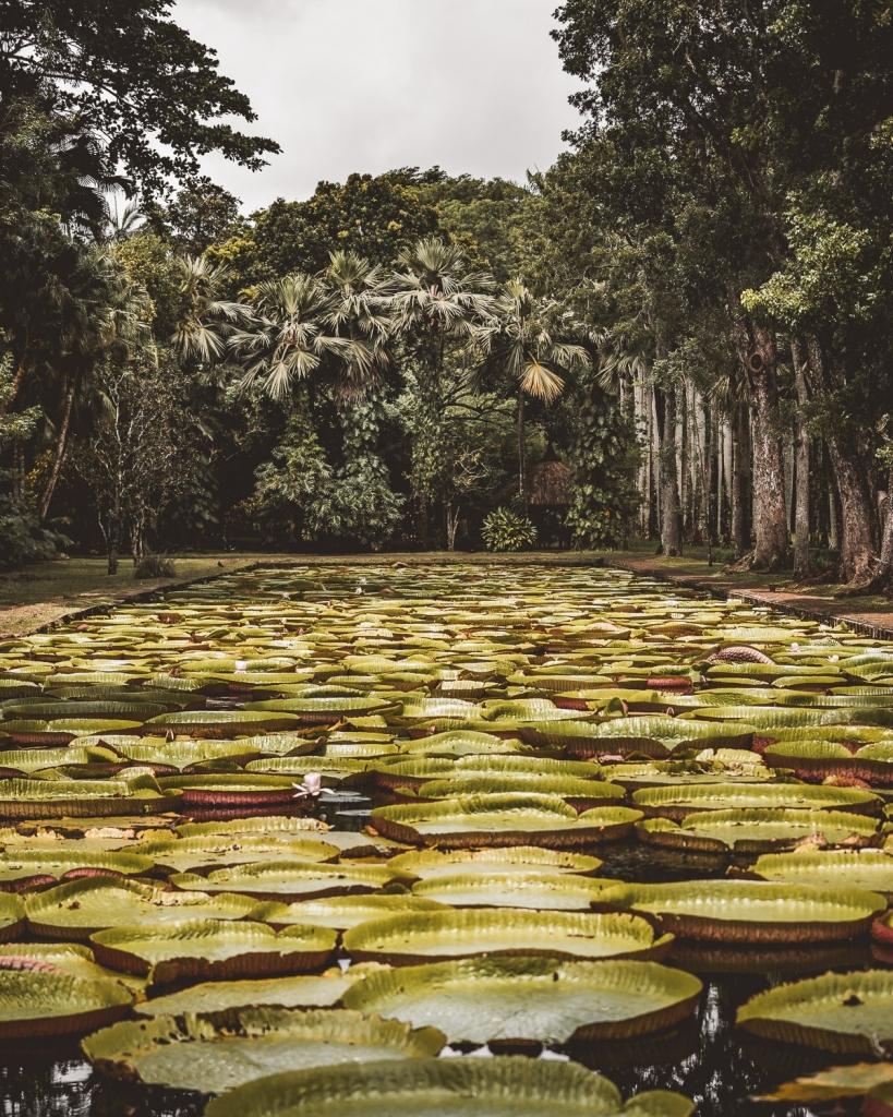 botanische tuin Mauritius