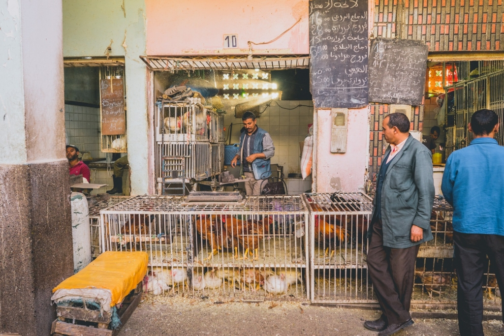 Kippenmarkt Agadir
