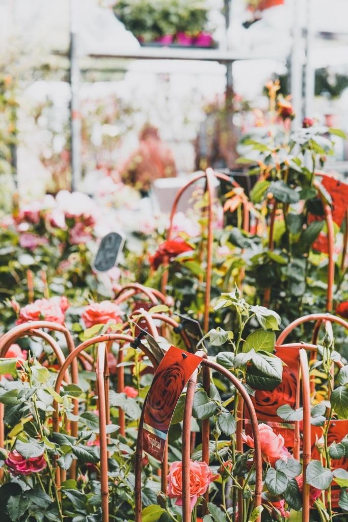planten kopen in brussel