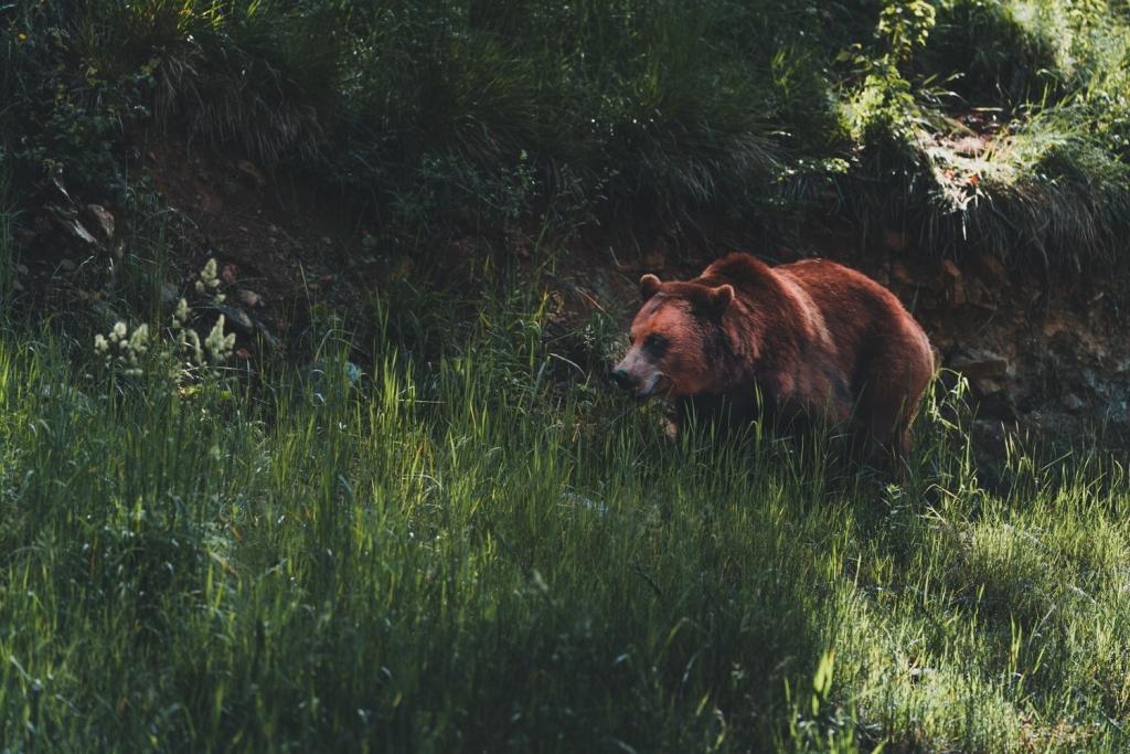 wildpark han slapen tussen wilde dieren
