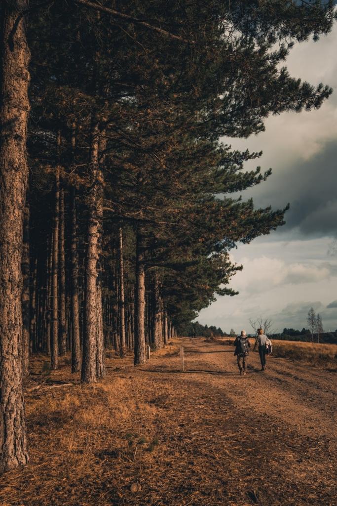 wandelen in park hoge kempen