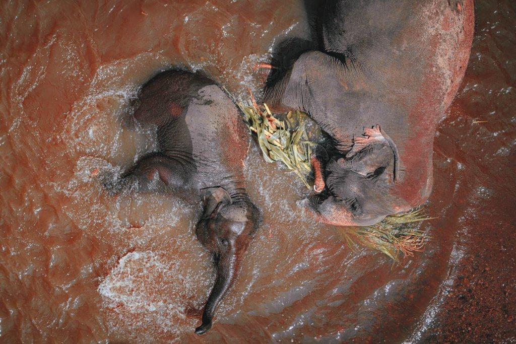 wilde olifanten thailand