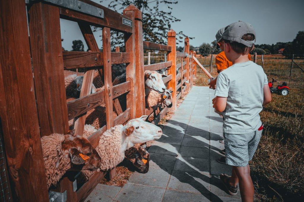ronse vakantiehuis schapenkop