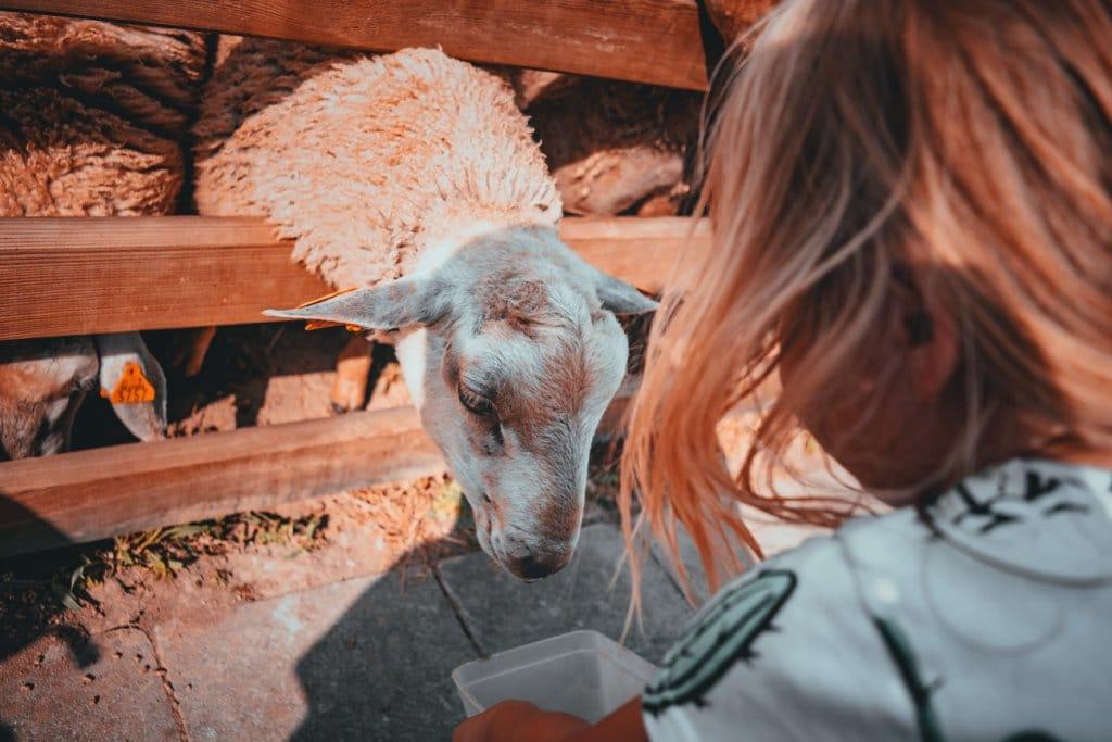 vakantiehuis de schapenkop