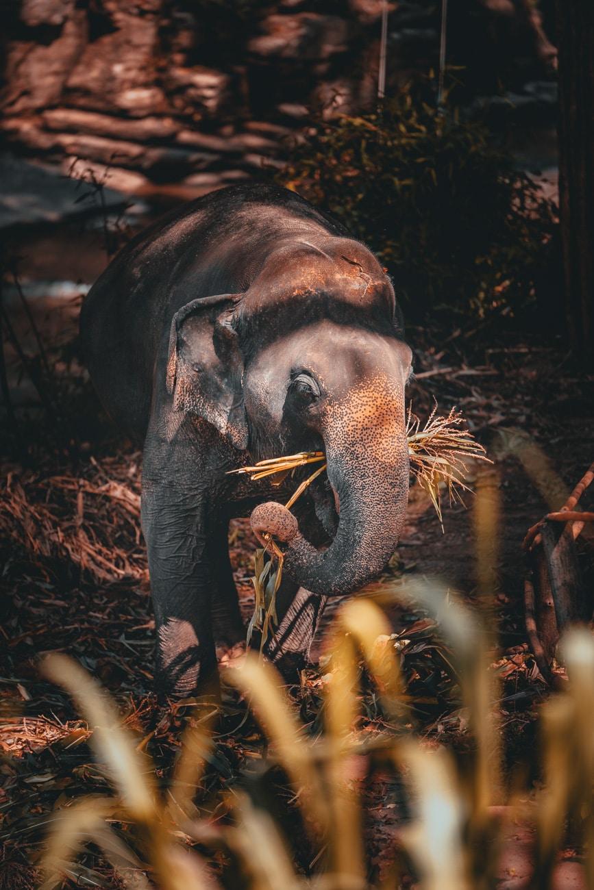 waar olifanten wassen in thailand