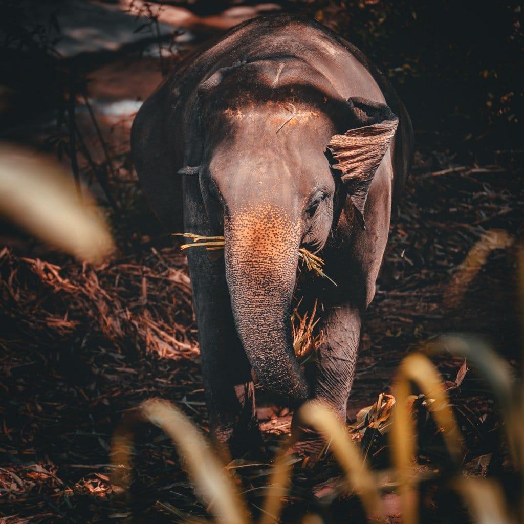 olifanten kijken in thailand