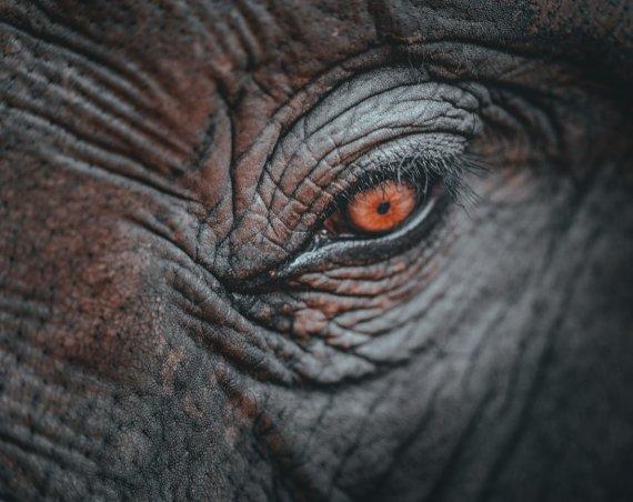 olifanten bezoeken chiang mai thailand