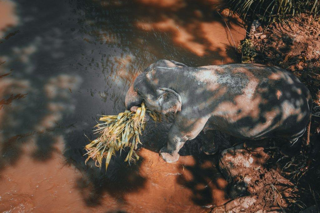 correct waar best olifanten in thailand bezoeken