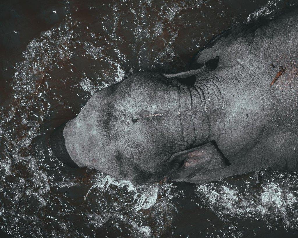 baden met olifanten