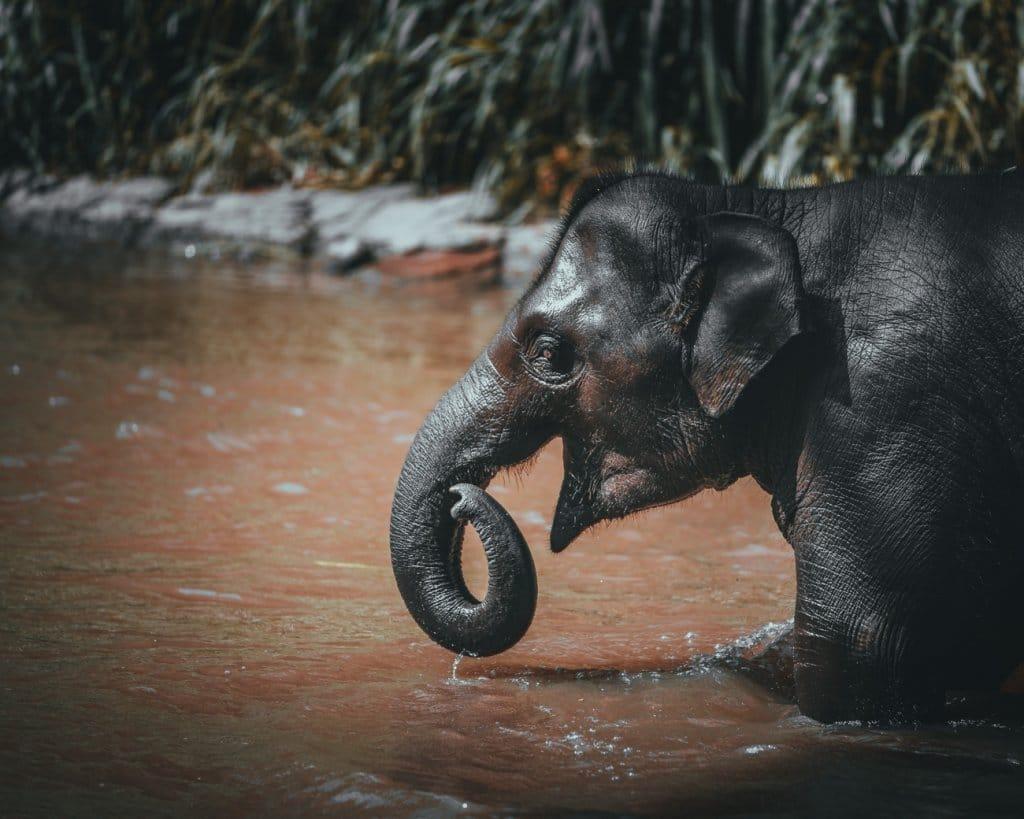 waar best olifanten in thailand bezoeken