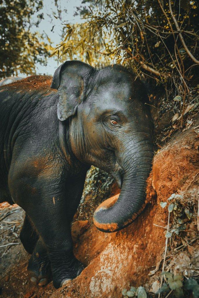 waar olifanten wassen thailand