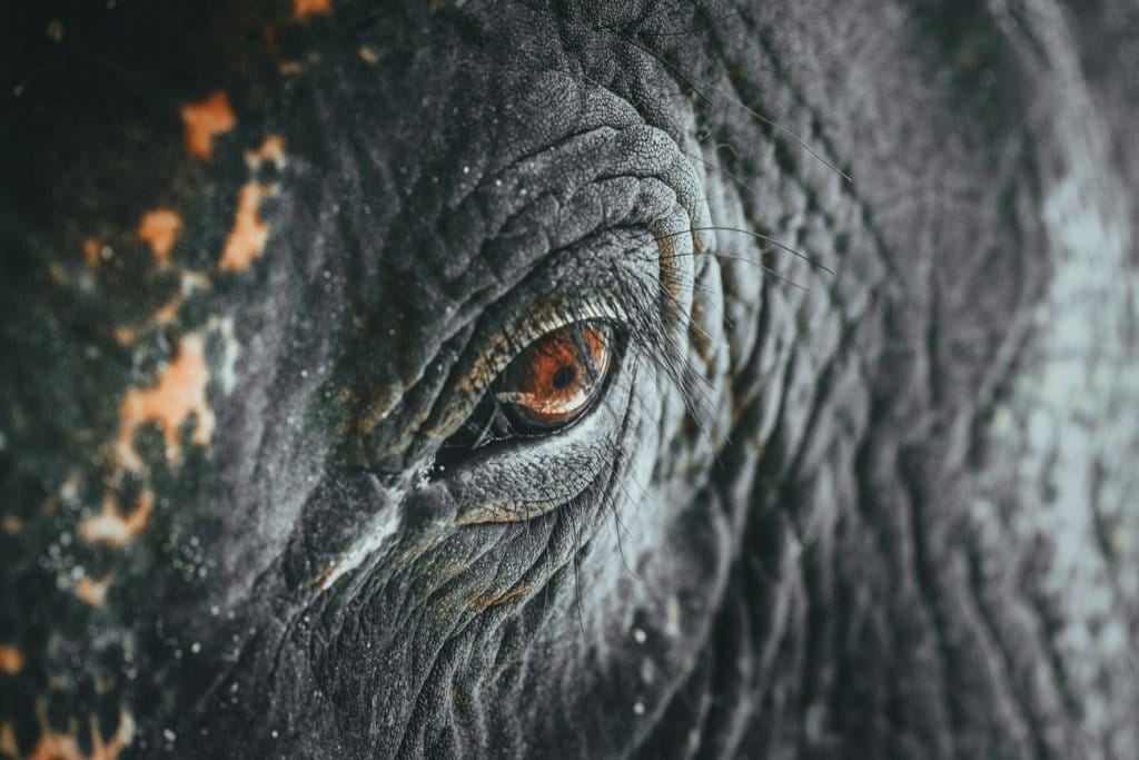 thailand elephant sanctuary chiang mai
