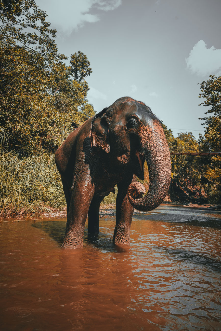 thailand olifanten goed