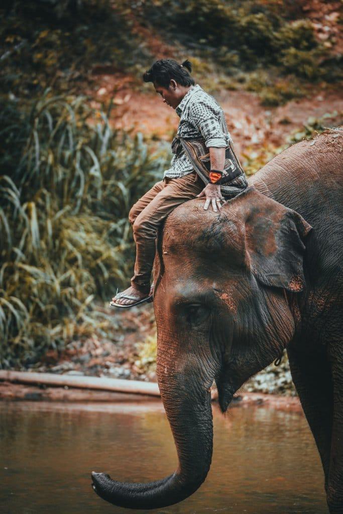 correct olifanten bezoeken