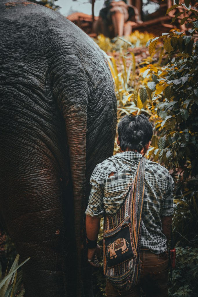 elephant sanctuary thailand