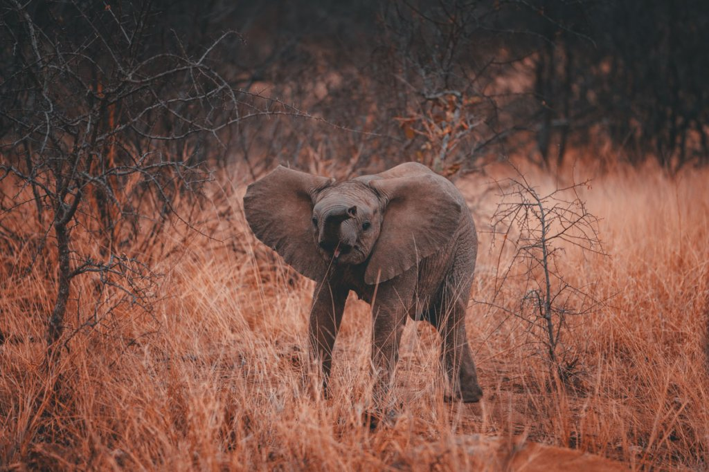 baby olifant big five zuid afrika