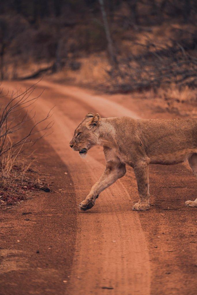 wilde dieren zuid afrika