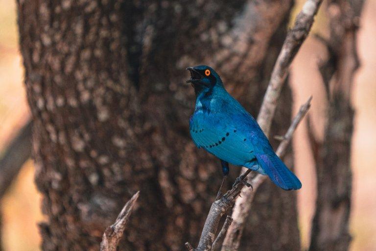 vogels kruger park zuid afrika