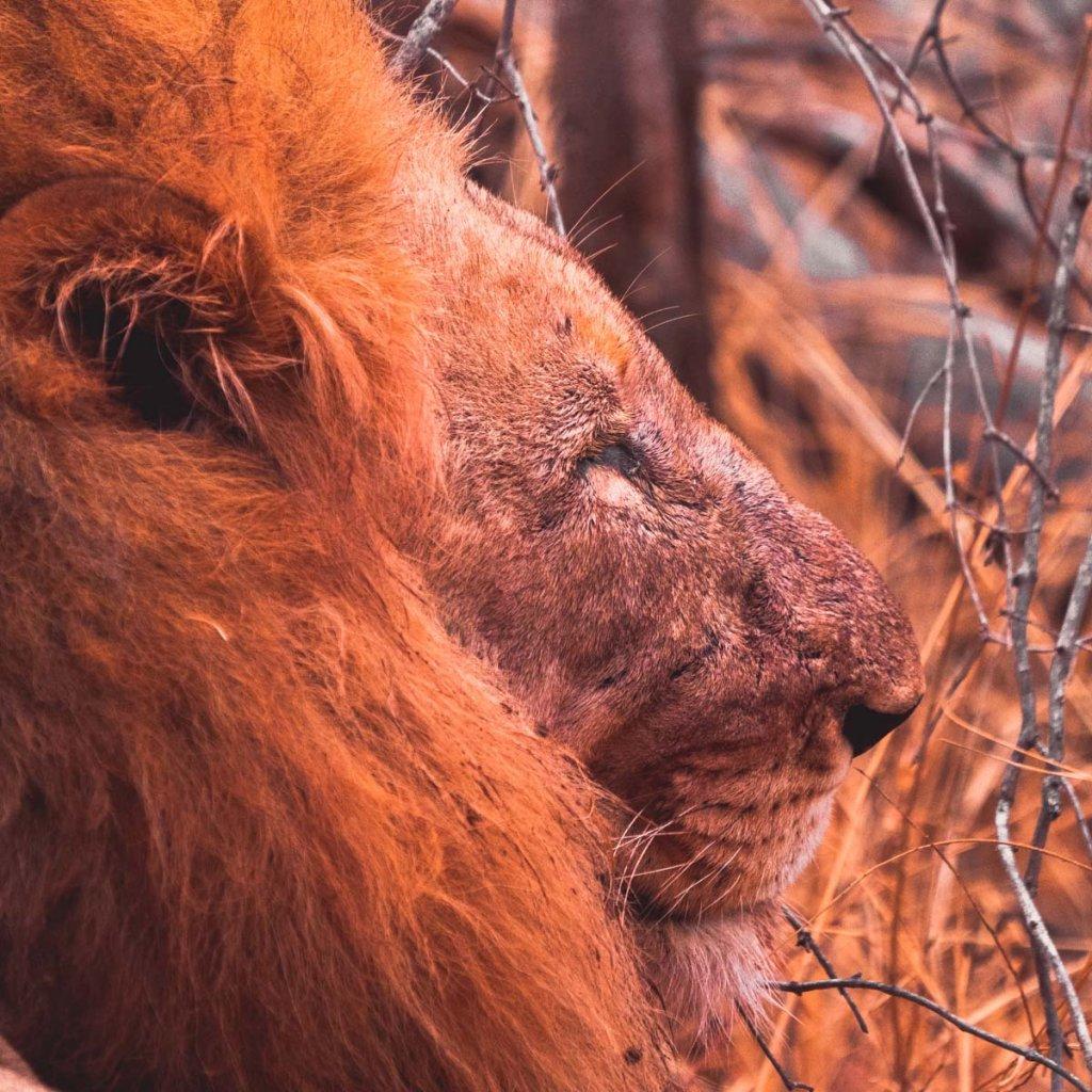 safari in het krugerpark