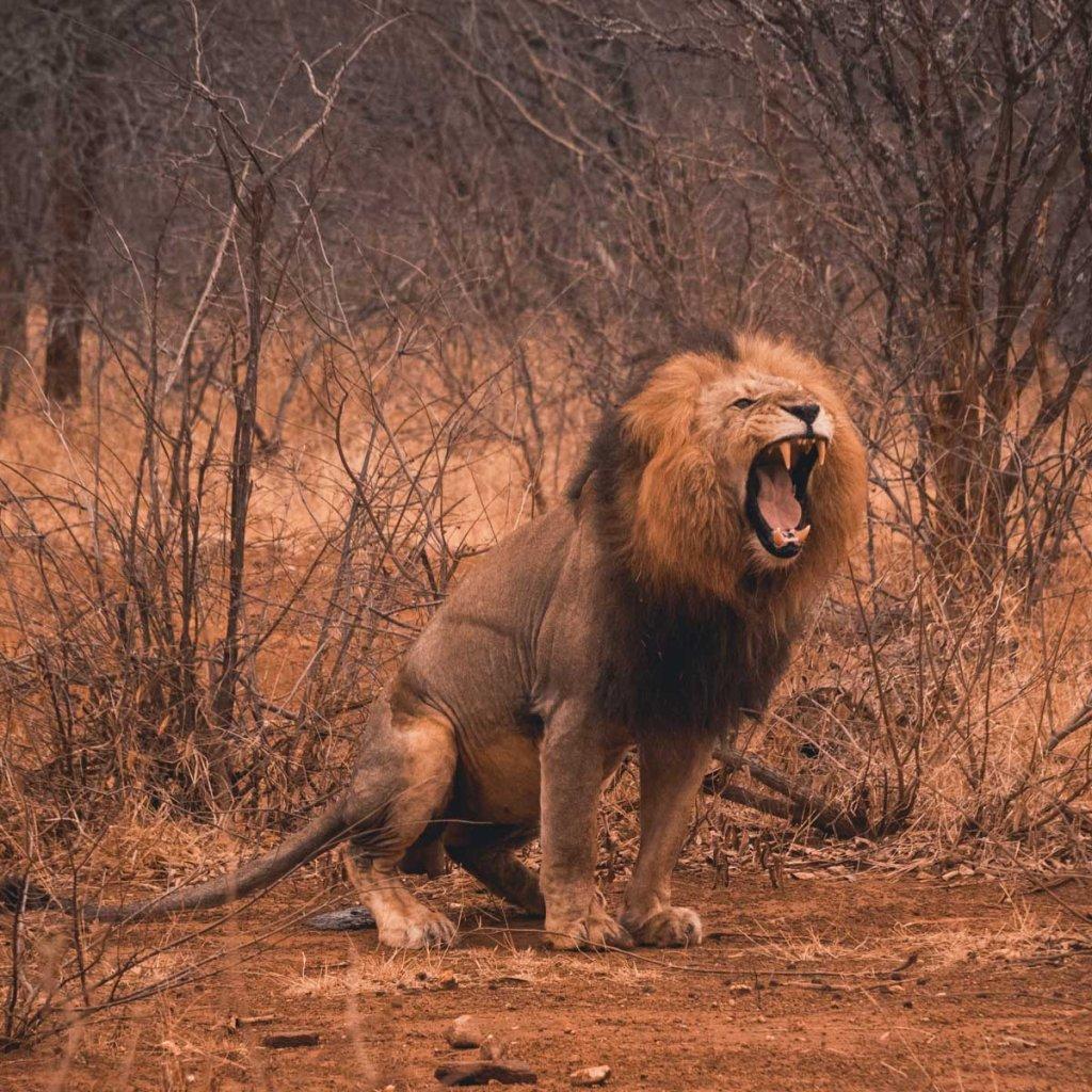 safari met wilde dieren in zuid afrika