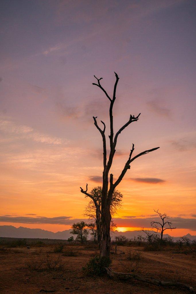 zonsondergang krugerpark zuid afrika