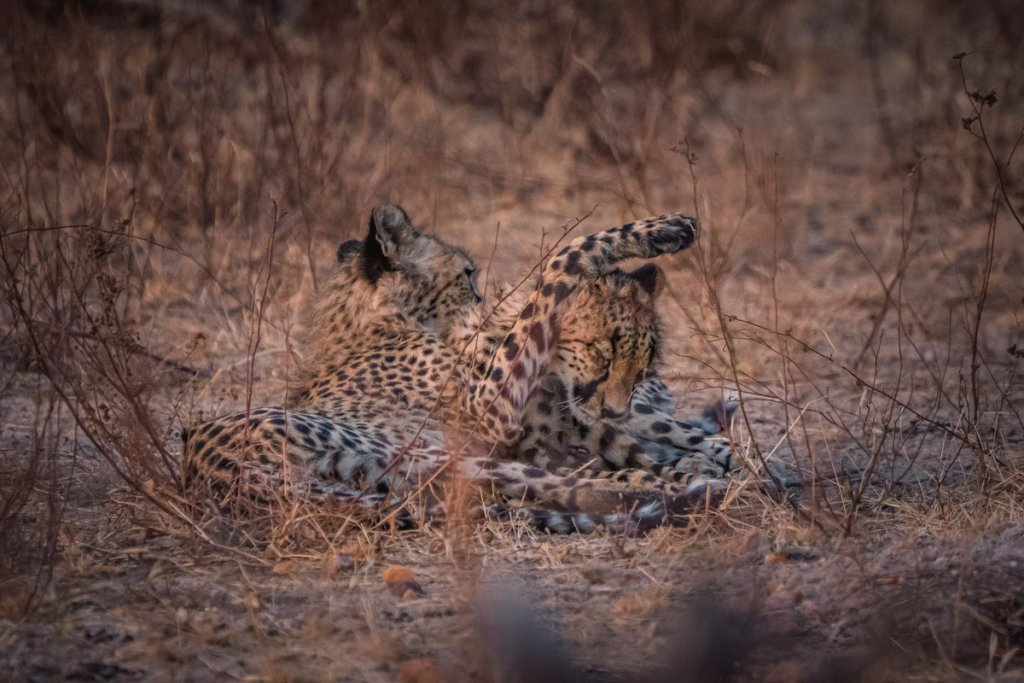 safari wilde dieren krugerpark