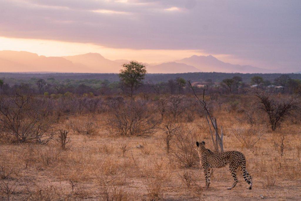 jachtluitpaard big 5 safari