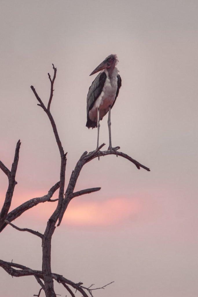 vogels spotten krugerpark