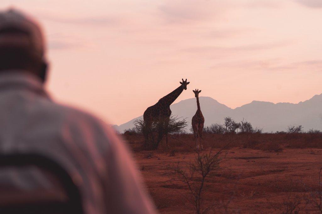 giriaffen en ander wildlife op safari