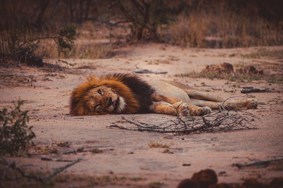wildlife verszorgen afrika