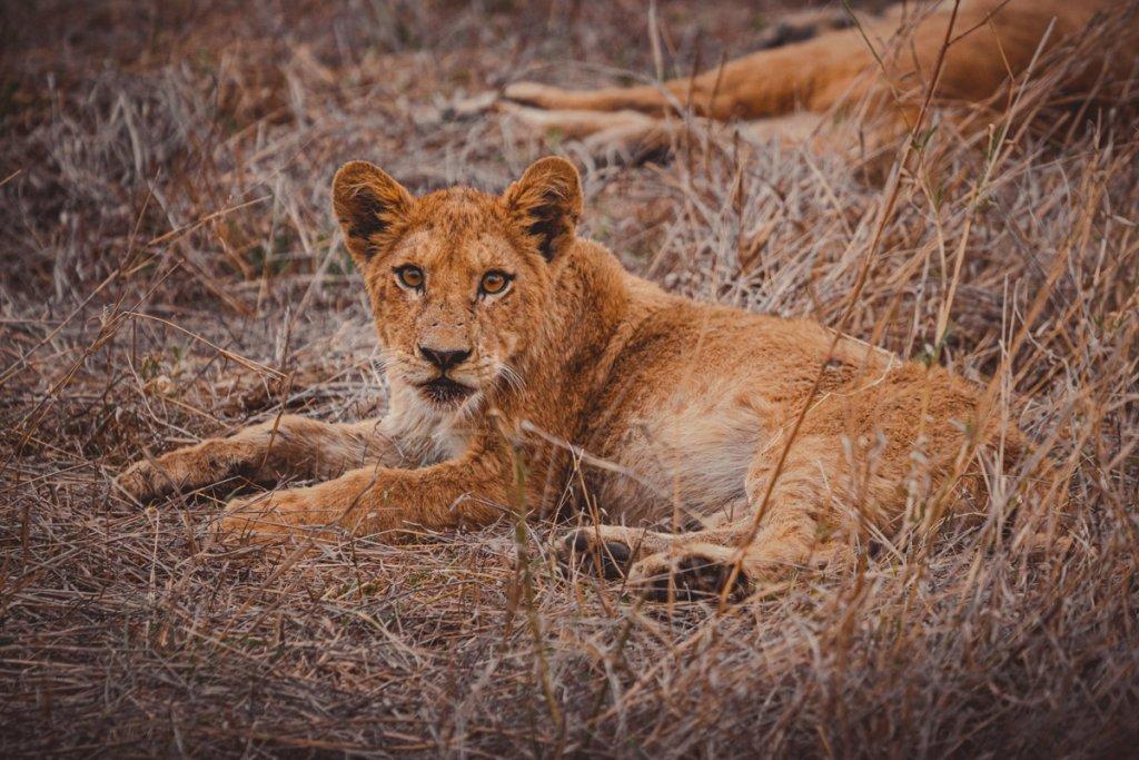 Boek je reis naar Zuid-Afrika via Soms Ook Heimwee. Dit zijn de goedkoopste vluchten en reizen