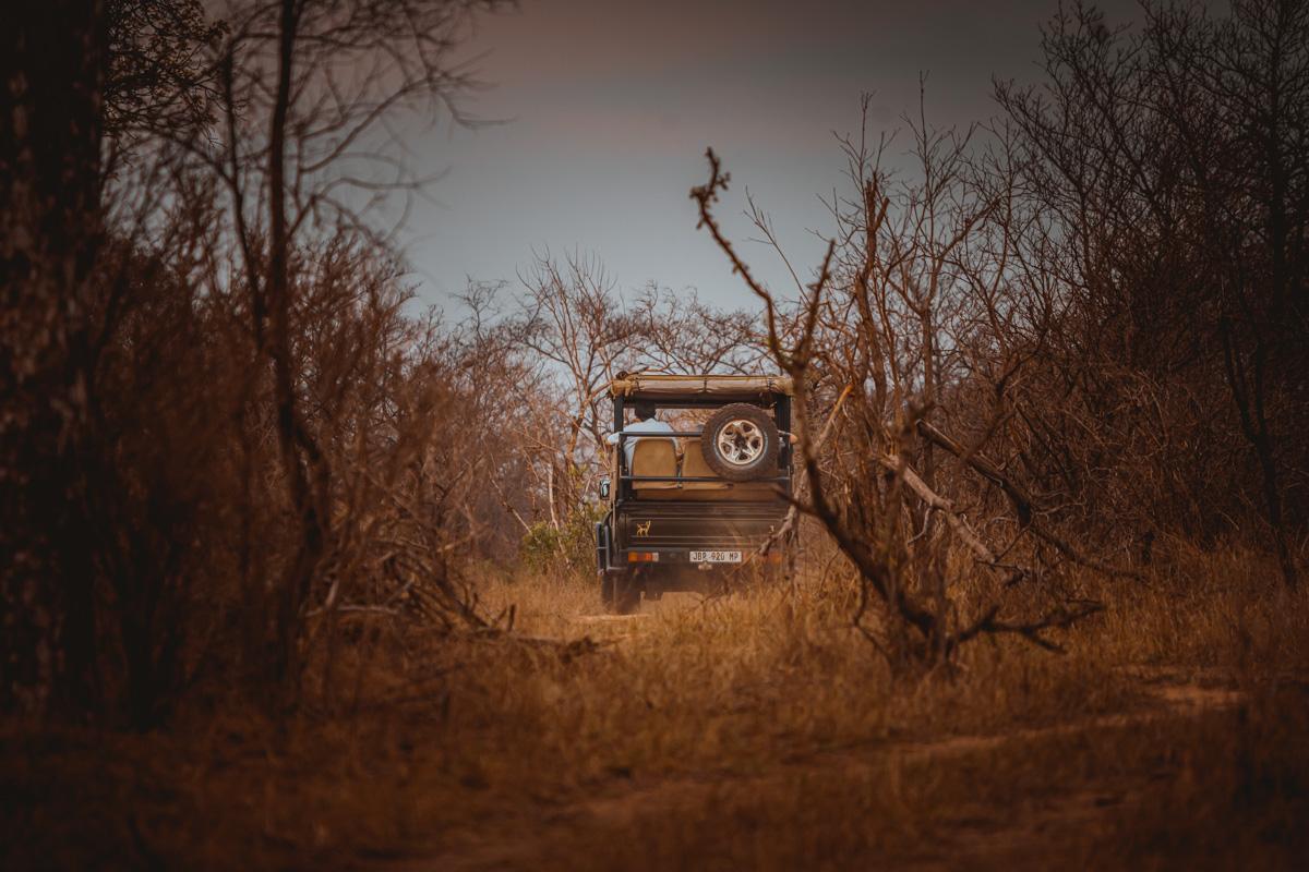 afrika safari