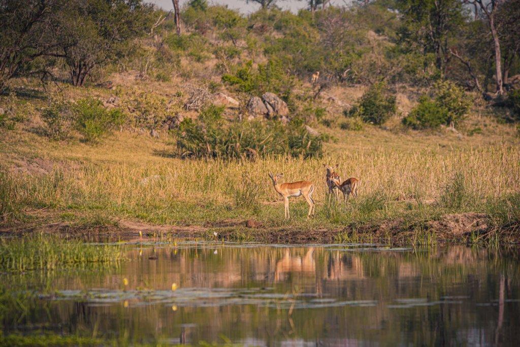 welke parken bezoeken zuid afrika