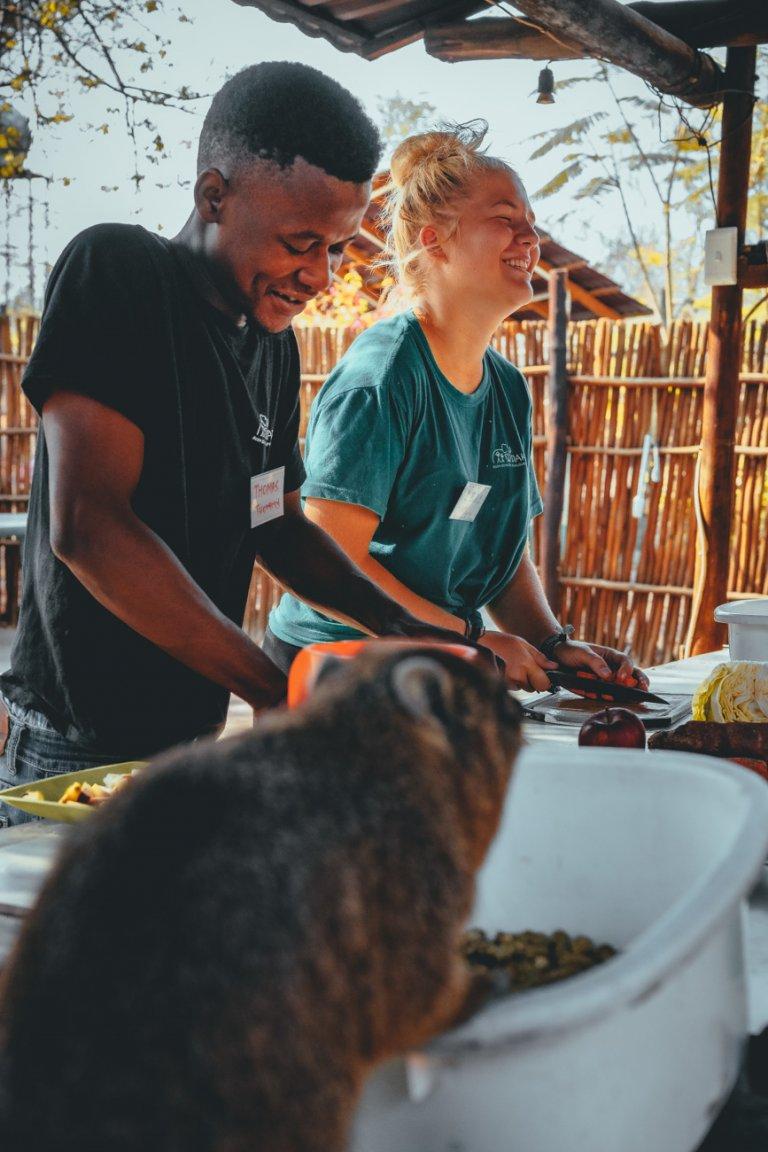 dieren verzorgen in zuid-afrika