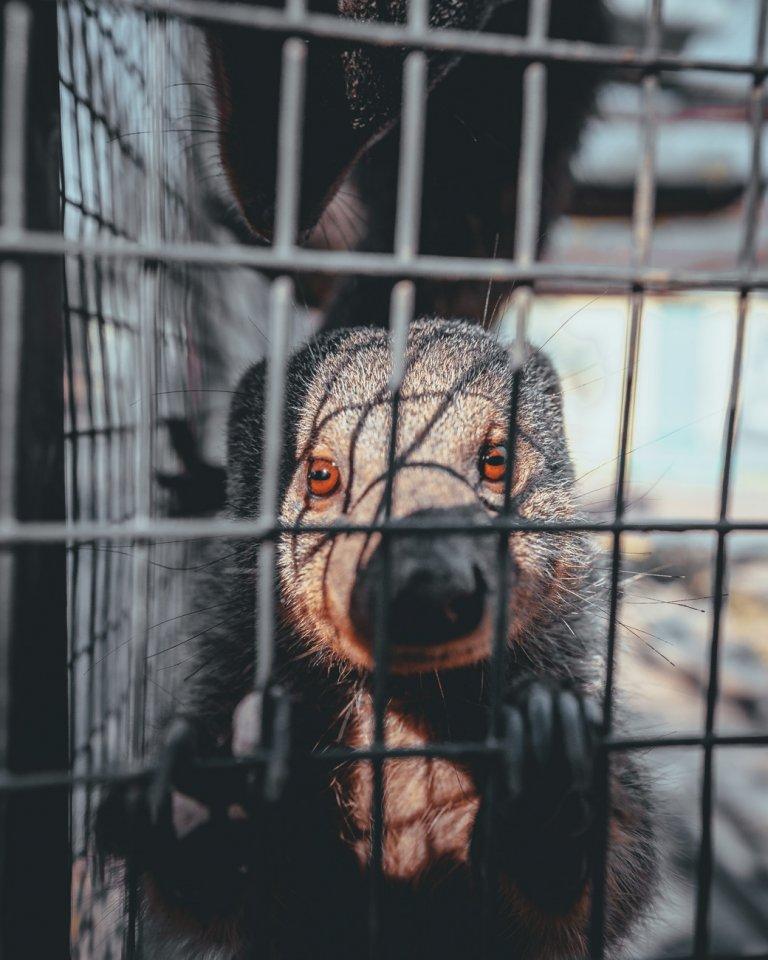 gewonde dieren van afrika verzorgen